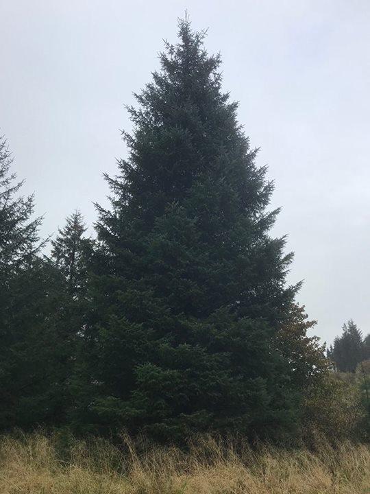 Edinburgh Christmas Tree
